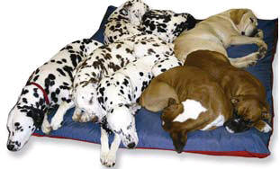 kennel-mate-dog-bed.jpg