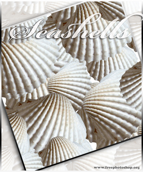 Seashells Pattern