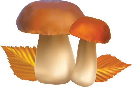small resolution of download clipart mushroom bing images mushrooms image hd photo 105