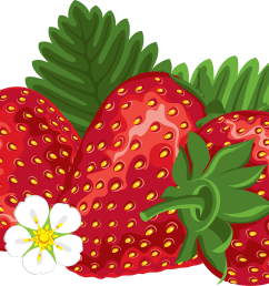 download clipart strawberry farmer strawberries images image free download png 173 [ 3439 x 2296 Pixel ]