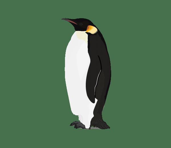 Cute Baby Pets Live Wallpaper Download Download Penguin Png Image Hq Png Image Freepngimg