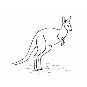 Kangaroo Aboriginal Dot Art Coloring Page Sketch Coloring Page