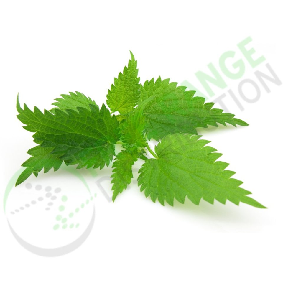 Nettle Leaf Extract
