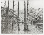 Photogravure of tall, leafless trunks extending up from reflective water through the top of the picture plane.