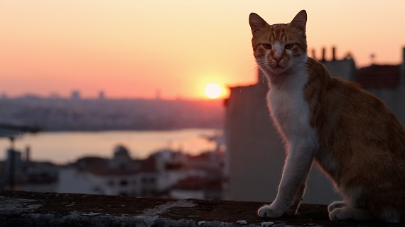 An orange and white cat is sitting on the edge of a balcony in front of a city scape and pink sunset.