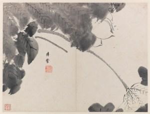 Lotus Album (8 leaves)