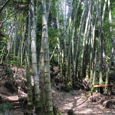 Pathway to the archaeological sites, Ngawonggo Village