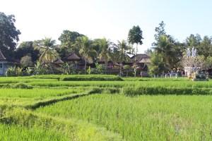 Thatch hut shrine complex in rice fields