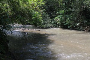 Low river in jungle from bank