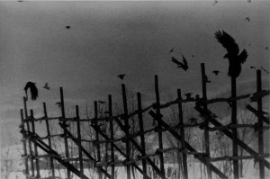 a black and white photo of a fence with crows