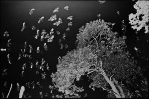 a black and white photo, reversed, trees and birds