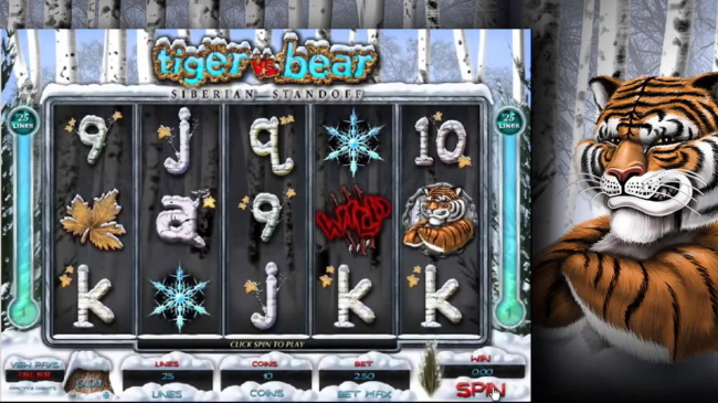 How to play Tiger vs Bear slot game