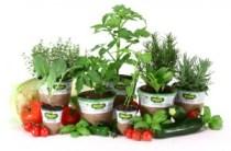 bonnie-herbs