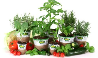 BOGO Free Plants or Seeds at Lowe's