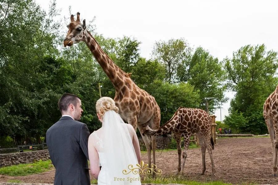 Chester Zoo Weddings Freespiritphotography Co Uk
