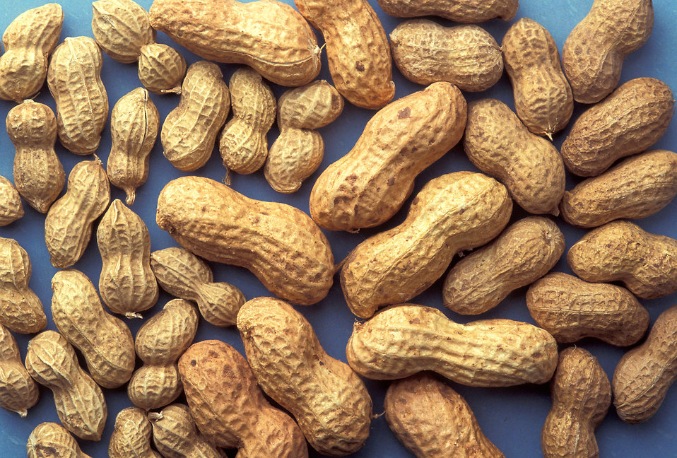 A group of peanuts on a blue background.