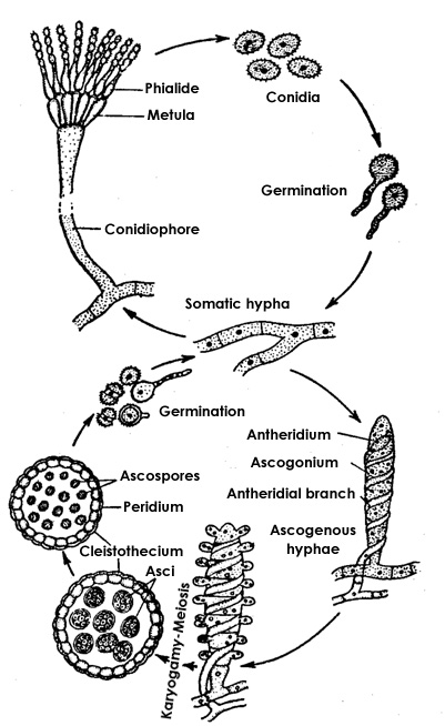 The Basics: Introduction to Microbiology and Infectious