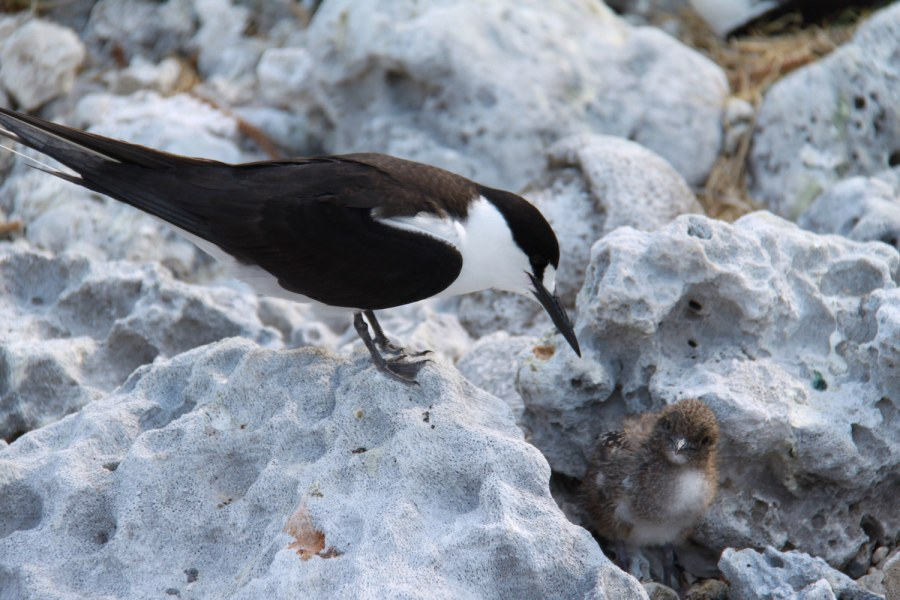 Mother bird watching over her baby in the nest