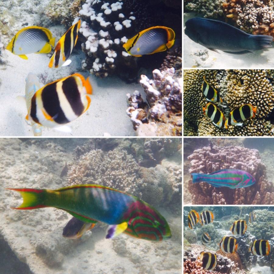 The abundant marine life on Lord Howe