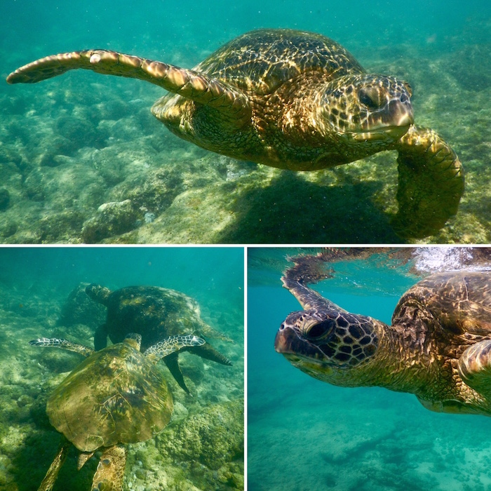 Snorkelling with turtles on Lawai Beach