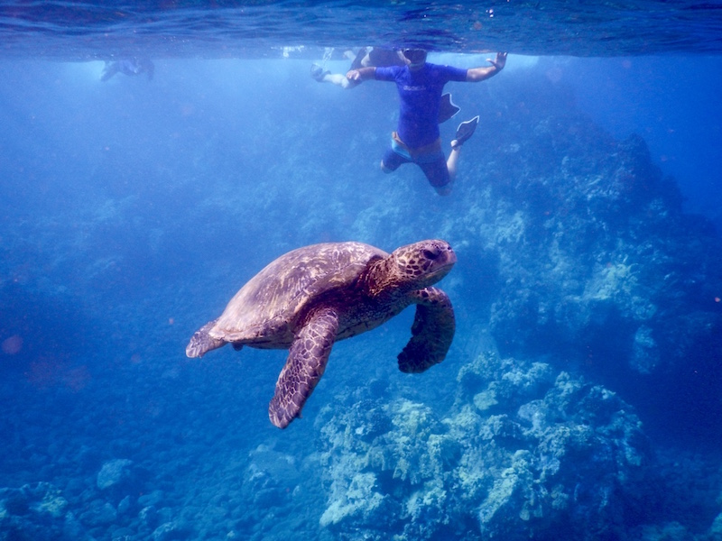 Swimming with turtles at Turtle Town