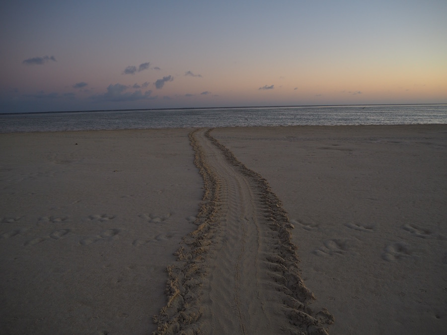 A turtle track on the beach.