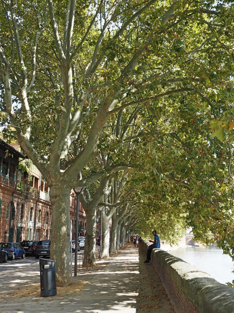 Lovely trees on the promenade.