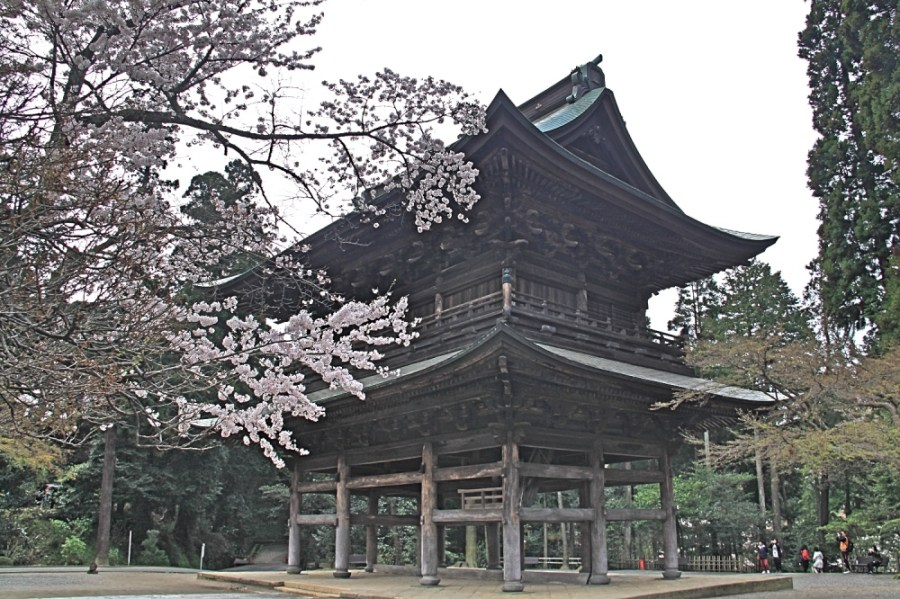 Engaku-Ji with the cherry blossoms.