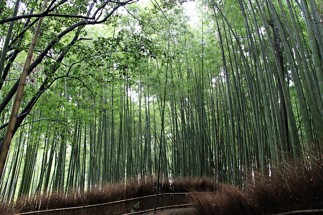 Bamboos everywhere!