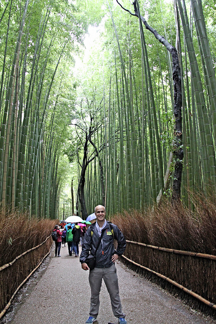 The busy bamboo forest!