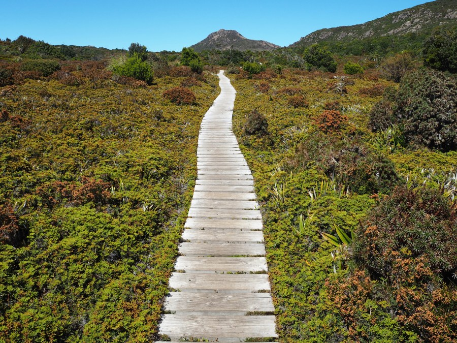 The boardwalk leading us towards Hartz Peak.