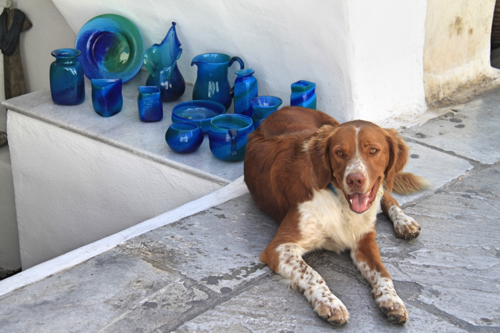 Santorini dog turned into shop keeper!
