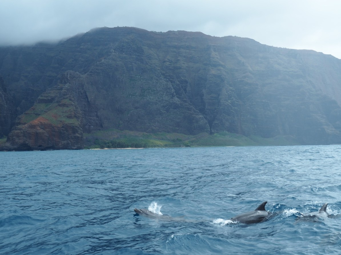 A pod of dolphins came to join in the fun!