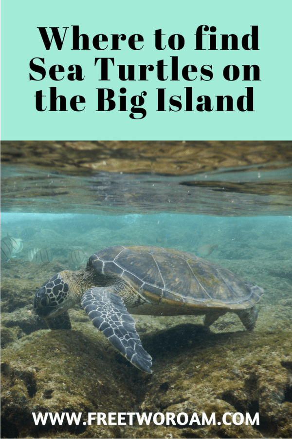 Where to find turtles on the big island