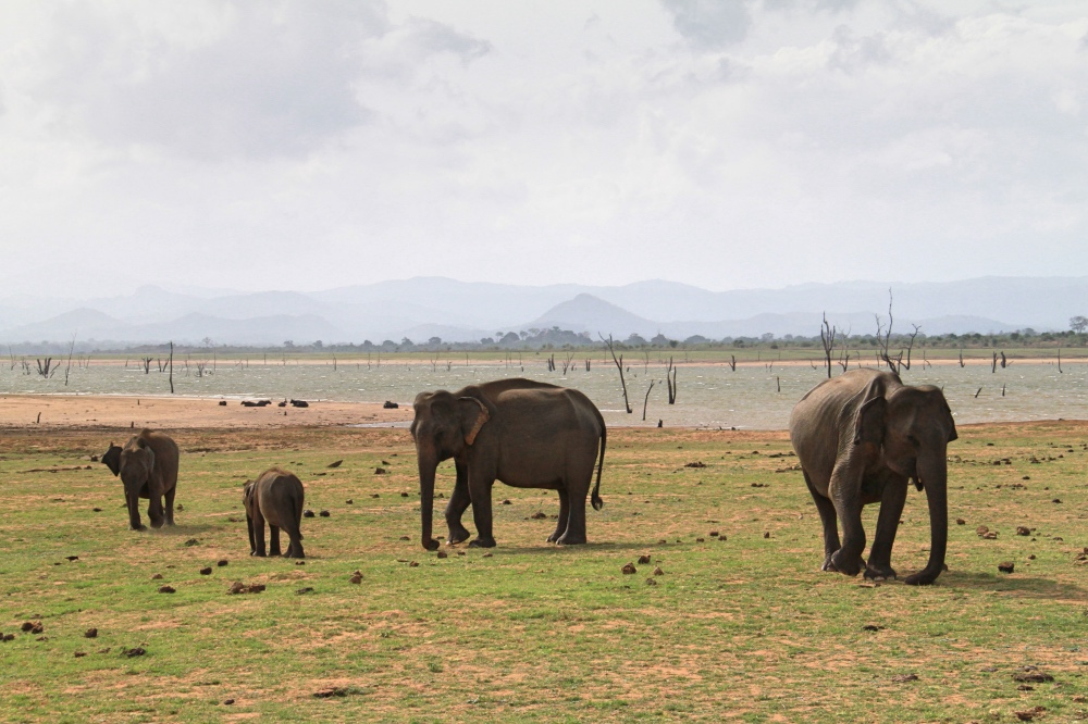 Elephants inside the park.