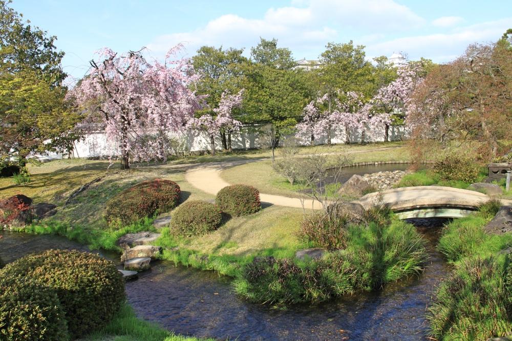 More cherry blossoms in the Kokoen Garden.