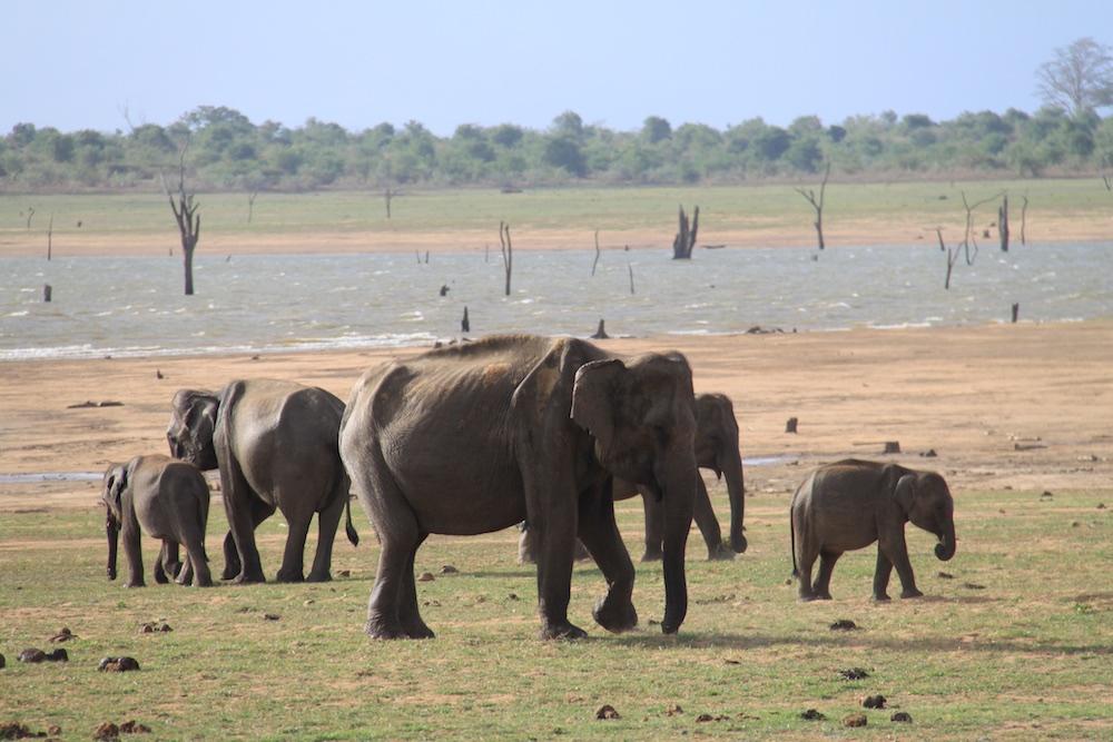 Many elephants around... big and small!