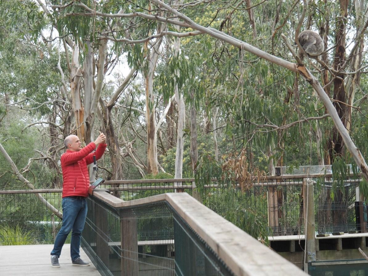 Simon snapping some koala photos.