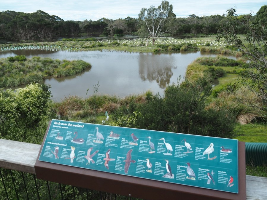 The wetland area of the Koala Conservation Centre.