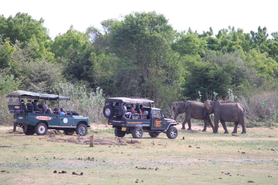 The 4WD vehicles used inside Udawalawe National Park.