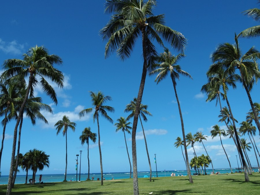 The Ala Moana Beach Park.