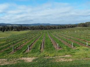 The vines of Warrenmang Vineyard.