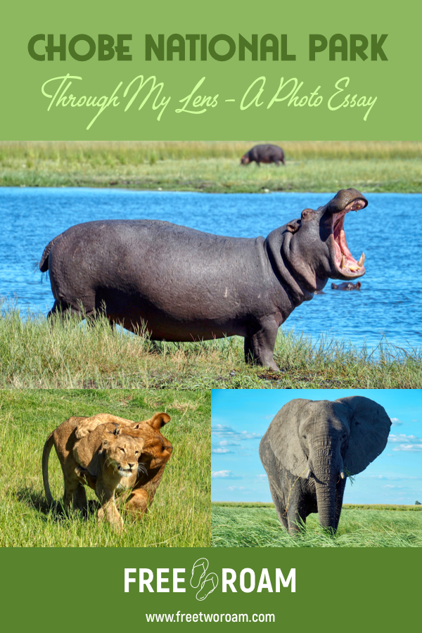 Chobe National Park Through My Lens: A Photo Essay