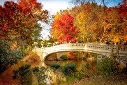 A Bridge in Central Park, New York