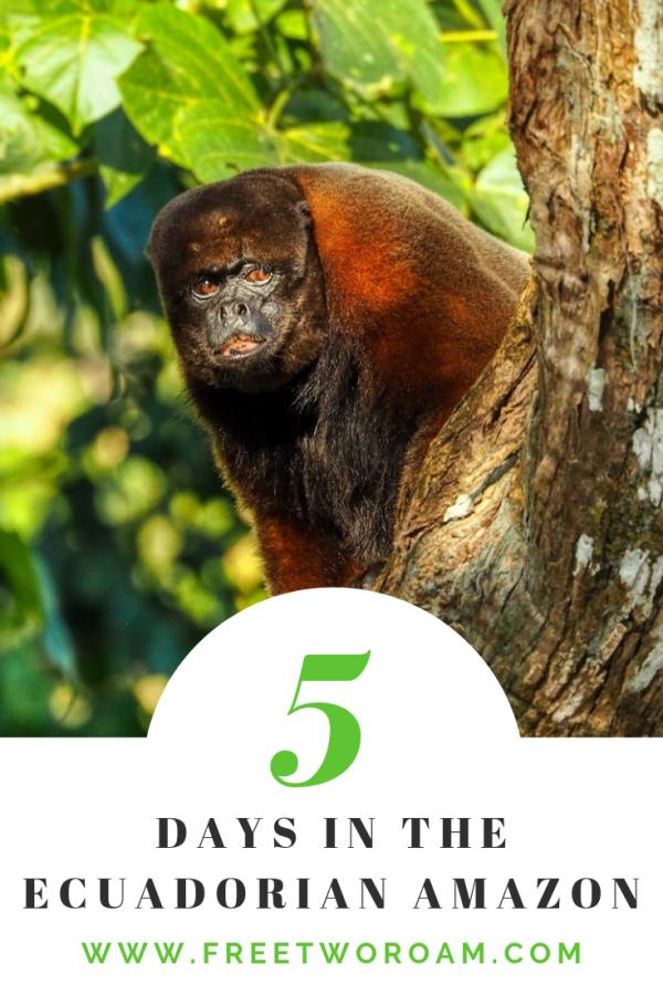 5 Days in the Ecuadorian Amazon