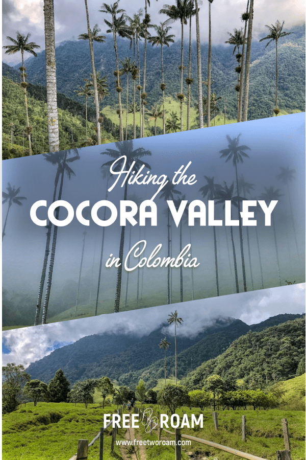 Hiking the Cocora Valley, Colombia