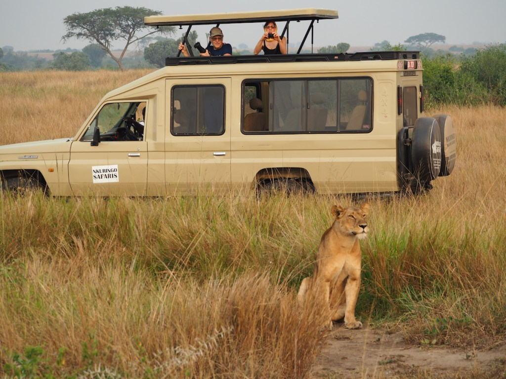Tracking lions in the Queen Elizabeth National Park