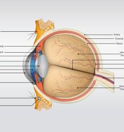 eye anatomy vector [ 1024 x 769 Pixel ]