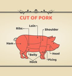 meat cuts of pork vector [ 1136 x 936 Pixel ]