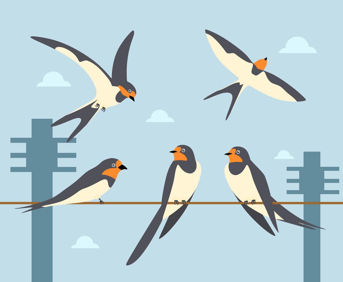 hight resolution of swallow illustration vector